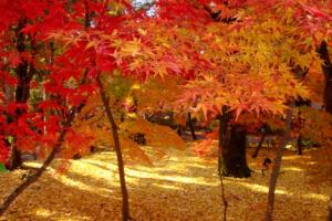 Outono japonês