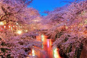 Primavera japonês